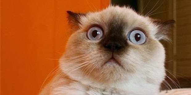 Some of The Most Confused Cats on the Planet Article Cats
