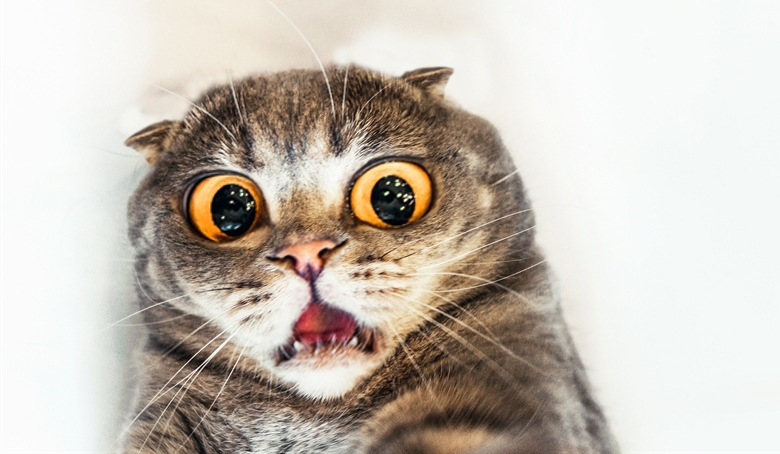 Weird Meow Cat In Car Video